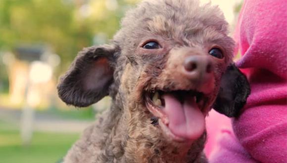 """Millones de perros y gatos de raza, en general, son explotados y forzados a vivir en las peores condiciones para reproducirlos y vender sus crías a cientos de dólares. B:B: es uno de los pocos que """"salen y viven para contarla"""". (foto: The Humane Society)"""