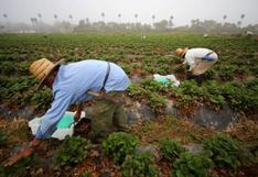 Seguro agropecuario: Midagri aprueba procedimiento para acceder a cofinanciamiento