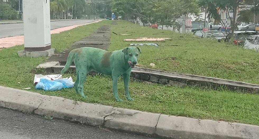 La triste historia de este perro pintado de verde se ha hecho viral en Facebook.