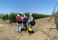 La Libertad: Sunafil verifica condiciones laborales en 110 empresas agroindustriales