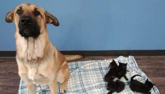 Perro es rescatado junto a unos gatitos huérfanos a los cuales criaba como si fueran sus propios hijos. (Foto: Facebook)