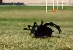 "Le salieron imitadores al famoso ""perro araña"" [VIDEO]"