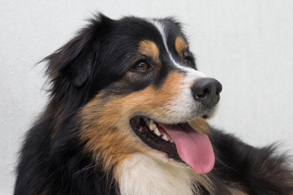 El perro sorprendió bastante a los usuarios de YouTube con su accionar. (Pixabay)