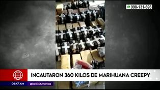 Piura: PNP incauta 360 kilos de marihuana