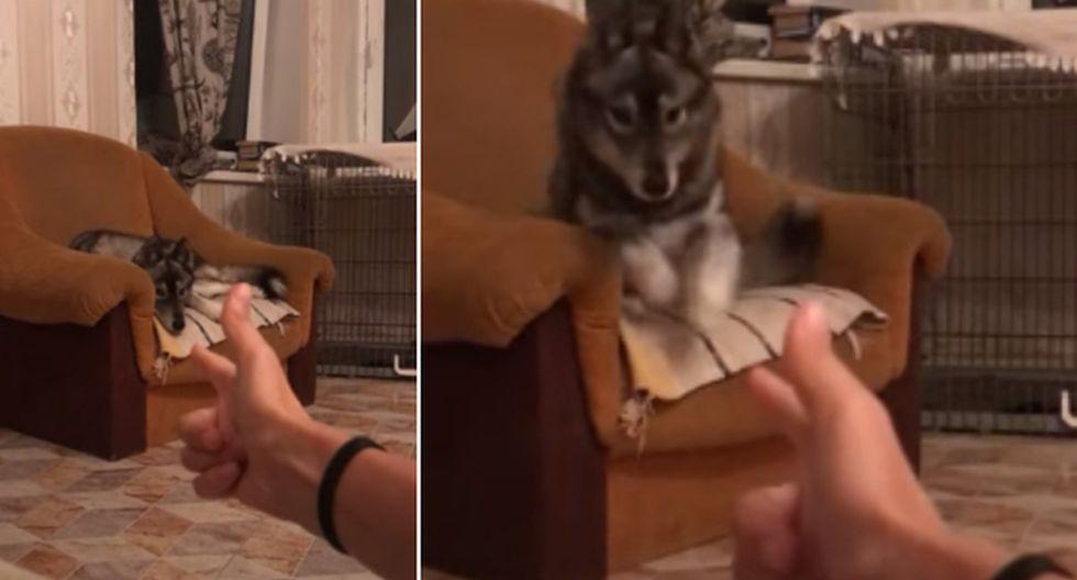El perro tuvo un comportamiento singular que dio la vuelta al mundo. (YouTube: ViralHog)