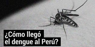 Dengue en el Perú: cómo llegó el virus y cuál es su situación actual
