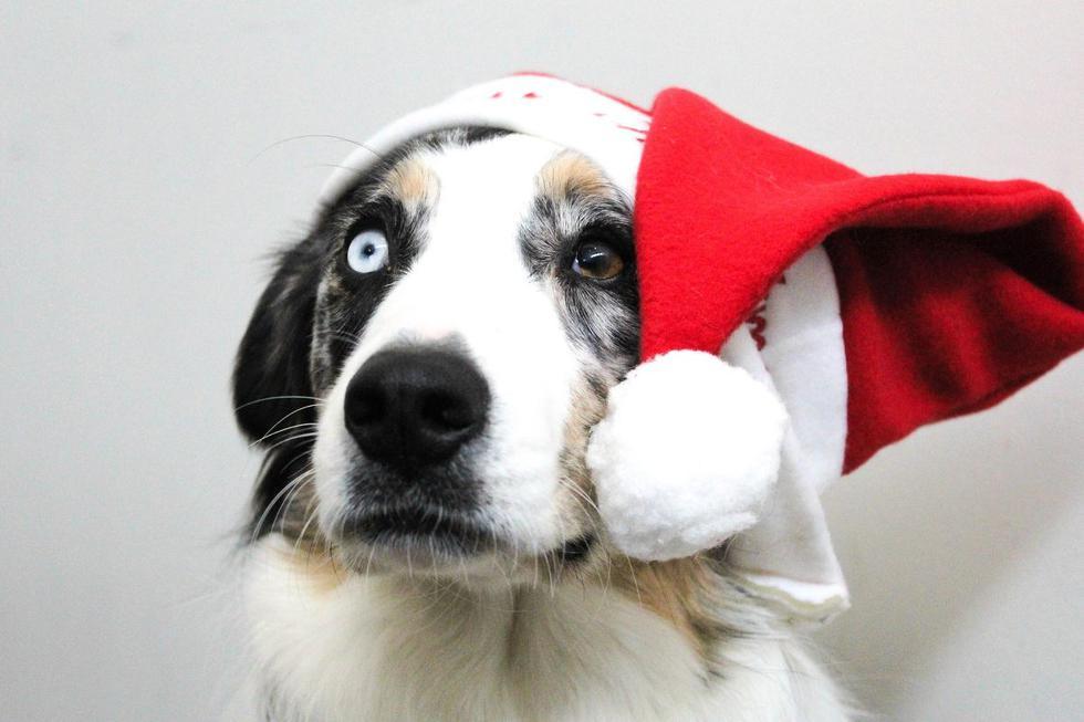 """La <a href=""""https://mag.elcomercio.pe/noticias/navidad/""""><font color=""""blue"""">Navidad</font></a> es sinónimo de unión familiar, cena y compartir; sin embargo, hay quienes aún esperan la llegada de la Nochebuena para prender pirotécnicos, afectando no solo a las personas que padecen autismo, sino principalmente a las mascotas. Aquí te contamos algunos trucos para calmar a tu perro o gato si empieza a sentir estrés, ansiedad y desorientación este 24 de diciembre."""