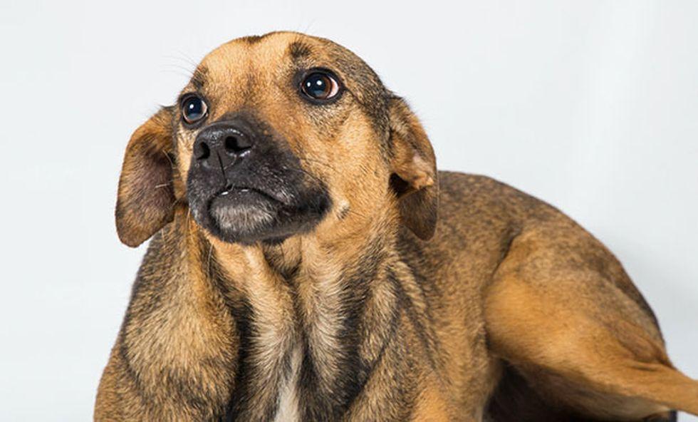 La apatía es un buen indicador de que algo anda mal. Si pasan muchos días y tu mascota no recupera el ánimo, date una vuelta por el veterinario. (Foto: Andrea Carrión)