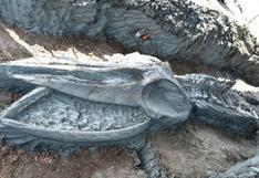 Descubren el esqueleto casi intacto de una ballena de hace al menos 3.000 años