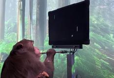Neuralink | Un mono controla un videojuego con su mente gracias al proyecto de Elon Musk