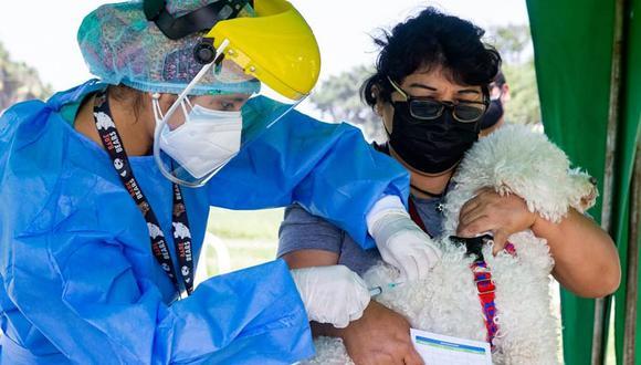 La 'vacunatón' de mascotas se desarrollará en tres parques de Surco. La campaña está dirigida a vecinos y personas de otras jurisdicciones de Lima. (Foto: Municipalidad de Surco)