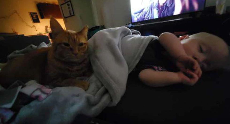 El gato dejó en claro a sus dueños lo mucho que quiere a la bebé. (Foto: The Dodo)