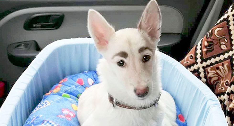 'Betty' es una perrita rusa que llama la atención en las redes sociales por la forma y color de sus cejas   Foto: Oksana Maymsina