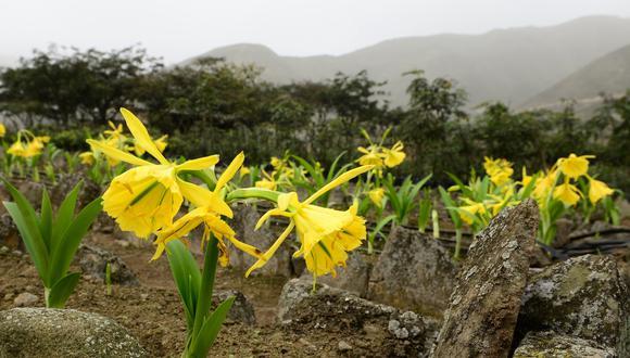 El Ministerio del Ambiente reconoció recientemente al proyecto Lomas de Quebrada Río Seco, impulsado por Unacem, como la primera área de conservación privada de Lima. (Foto: Unacem)