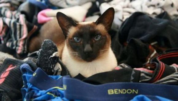 La gata que robaba ropa interior de hombre en Nueva Zelanda