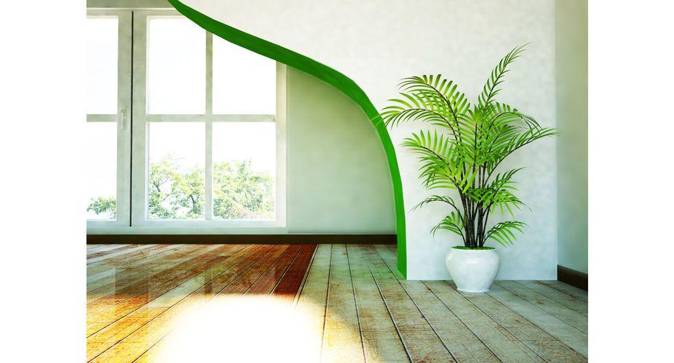 Conoce los beneficios de tener plantas en el hogar - 2