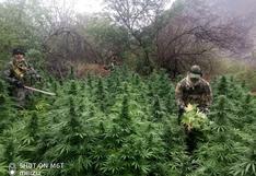 Ayacucho: destruyen más de 255 mil plantones de marihuana y cinco laboratorios clandestinos