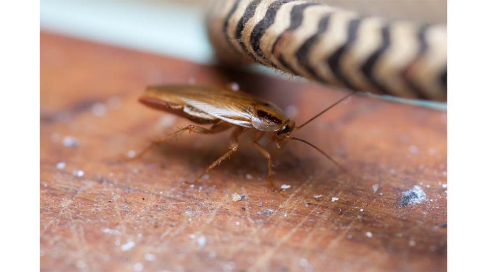 Dile adiós a los insectos en casa con estos trucos - 2