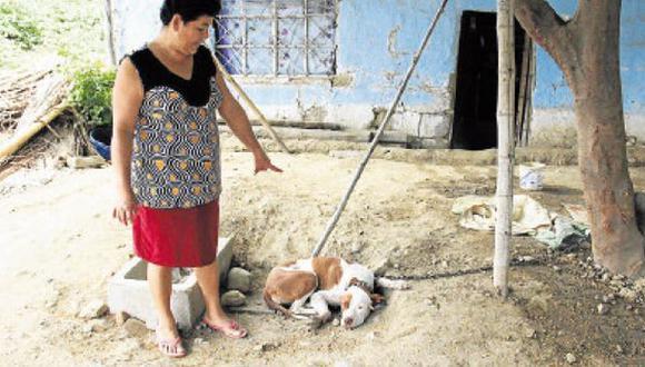 Sullana: delincuentes envenenan a 10 perros para robar en casas