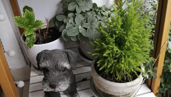 Cómo cuidar nuestras plantas en tiempos de cuarentena