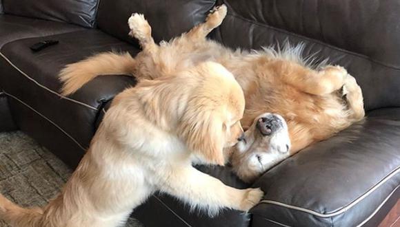Ambos perros se han convertido en inseparables. (Foto: Instagram @charlieandmav)