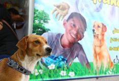 El legado de amor que dejó Jean Francis, el niño que rescató a su mascota en Villa El Salvador | CRÓNICA