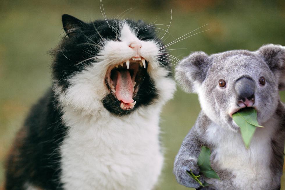 Se sabe que los gatos ferales se sienten atraídos por las áreas recientemente quemadas, donde es más fácil cazar a sus debilitadas y vulnerables presas. (Foto: Pixabay/Referencial)