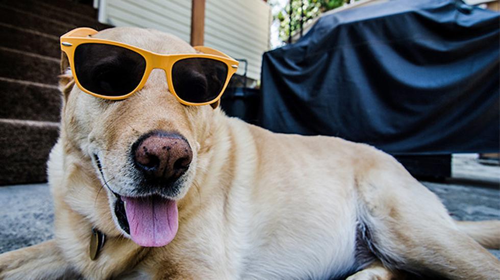 ¿Cómo afecta el verano los ojos de tu perro? - 1