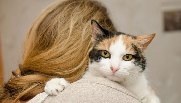 Joaquim parecía ser un inofensivo y educado gato, hasta que su dueña comprobó su travesura diaria. (Foto: Pixabay)