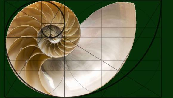 La hermosa concha del nautilinos con su espiral logarítmica es la imagen clásica usada para ilustrar el desarrollo del cálculo. (Foto: Getty)