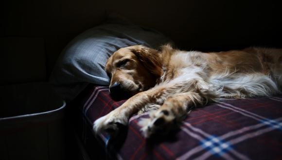 ¡Comodidad ante todo! El tierno perro buscó toda la noche la mejor posición para dormir. (Foto: Pixabay)