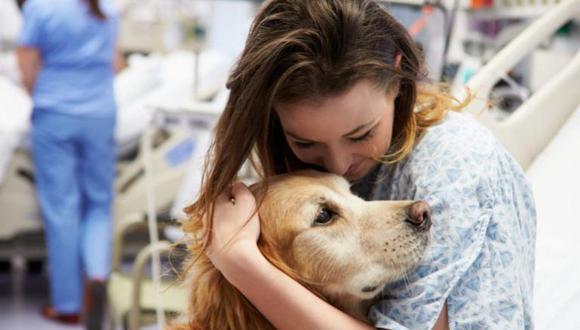 ¿Cómo están ayudando los perros de terapia a combatir contra el coronavirus? (Foto: Zooplus)