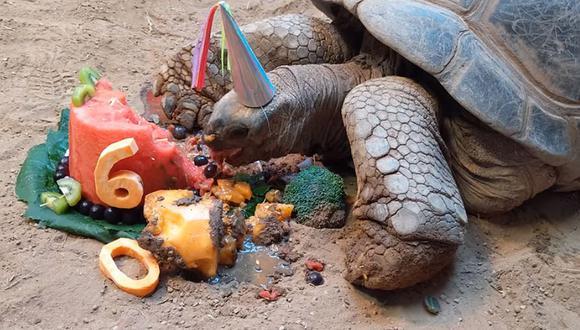 'Henry' es una de las tortugas más queridas en el zoológico y tuvo su fiesta. (Foto: Facebook Clyde Peeling's Reptiland)