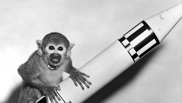 Miss Baker es un mono ardilla hembra, nacido en Iquitos, que viajó al espacio y se convirtió en uno de los primeros animales lanzados por EE.UU. y que volvió vivo a la Tierra. (Foto: De NASA/Marshall Space Flight Center)