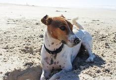 WUF: Aprende a cuidar la piel de tus mascotas este verano