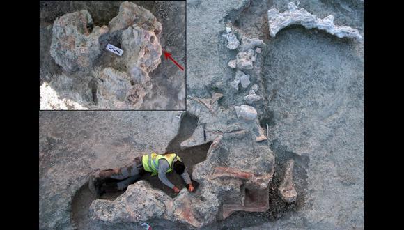 Reconstruyen forma del neurocráneo de un titanosaurio español