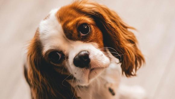 El can causó mucha ternura entre los usuarios de TikTok. (Foto referencial - Pexels)