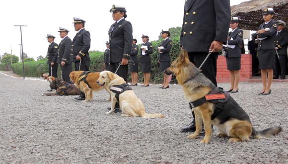Canes de la patria: ¿cómo entrenan a los perros de la Marina de Guerra?