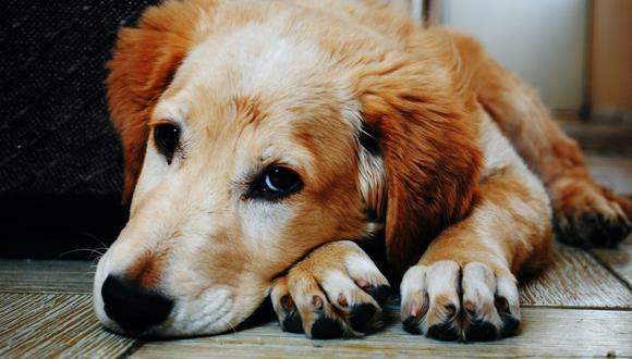 Cuidar de sus uñas es una rutina importante y sencilla para asegurar la salud del perro. (Foto: Bruno Cervera / Pexels)