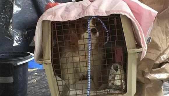 Buscan rastros de ébola en perro de mujer infectada en EE.UU.