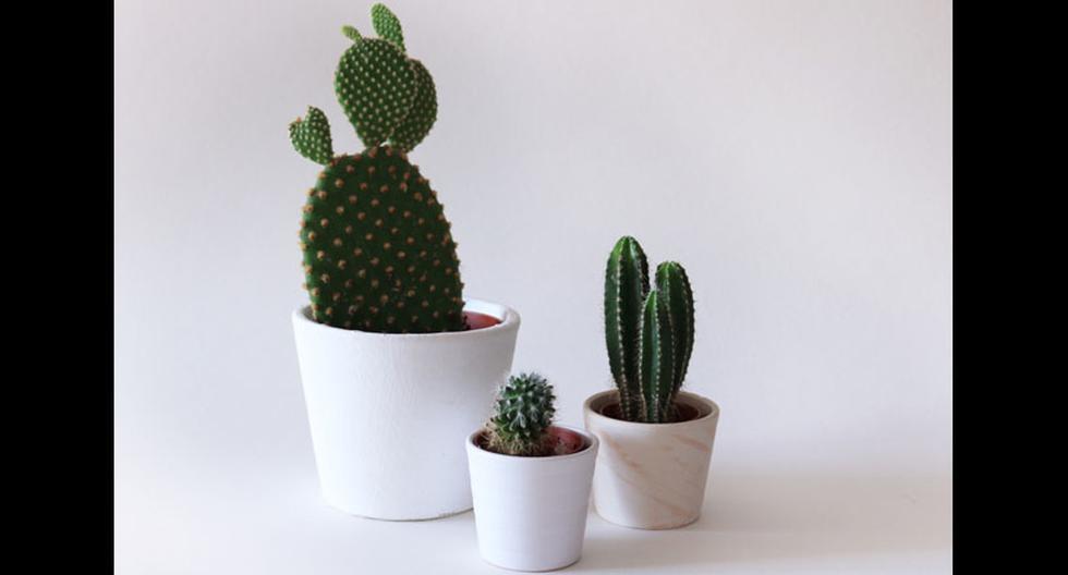 En el Perú hay más de 250 especies de cactus, de las cuales unas 200 se encuentran únicamente en nuestro territorio. (Foto: Shutterstock)