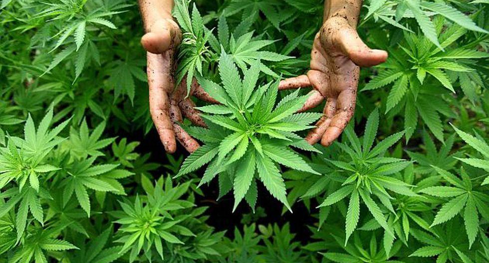Devida pide al Minsa debatir la legalización de la marihuana