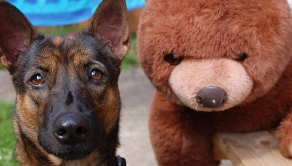 El perro ha dejado sorprendidos a muchos usuarios de YouTube. (Pixabay)