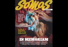El amor por las mascotas después de la muerte