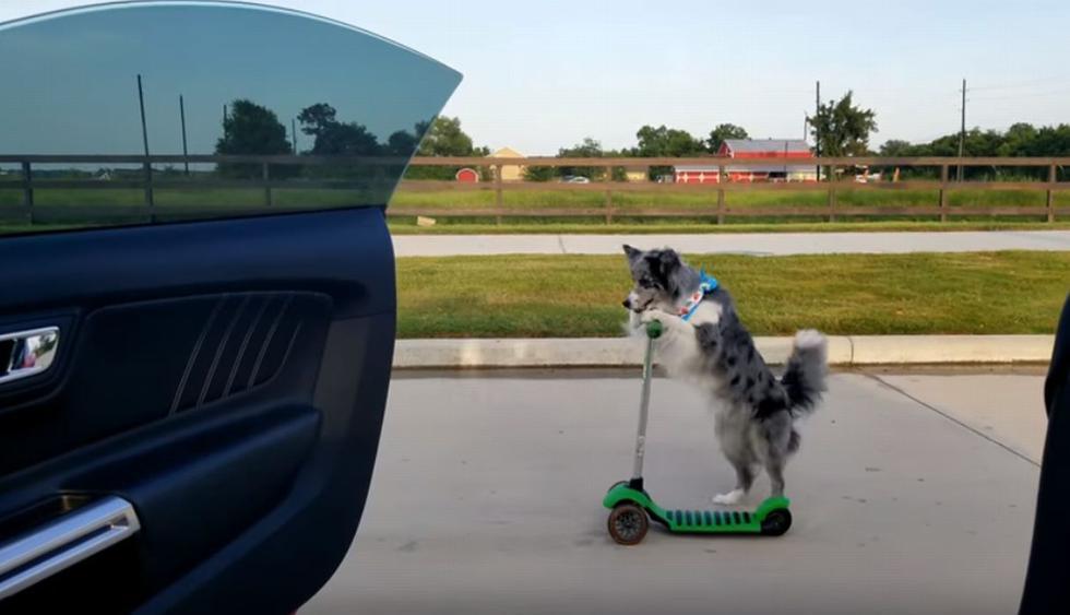 El accionar del perro a impactado a miles de cibernautas. (YouTube: Viralhog)