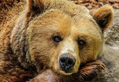 El momento en que un 'oso' malherido asusta a una familia que iba por un camino solitario