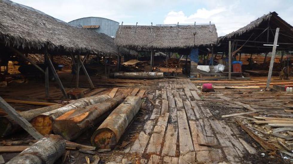 Iquitos: incautan madera valorizada en más de S/. 5 millones - 3