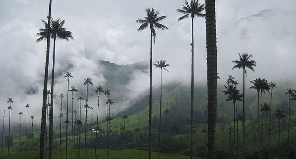 Este valle colombiano tiene las palmeras más altas del planeta - 1