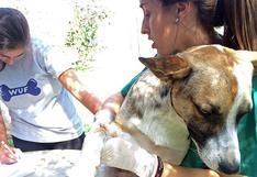 WUF: ¿Por qué es importante realizarle un hemograma a tu mascota?
