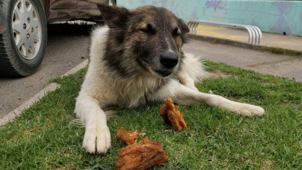 Uno de los animales a los que Ferchy lleva alimentos. (BBC Mundo)